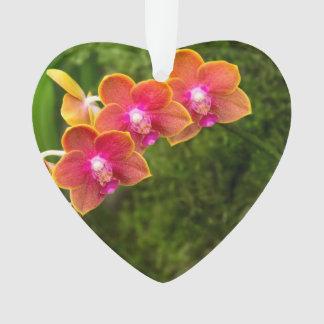 Orquídea - Phalaenopsis - atar el Cupid de Shin