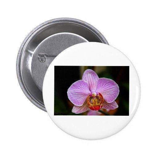 Orquídea (Phalaenopsis) Pins