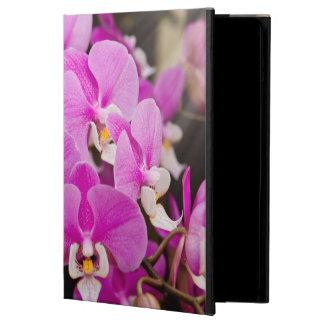 Orquídea - Phalaenopsis - rosa cosquilleado
