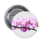 orquídea pin