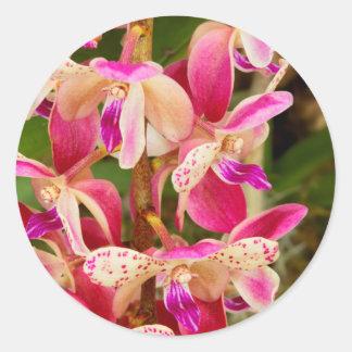 Orquídea - placer tropical pegatina redonda