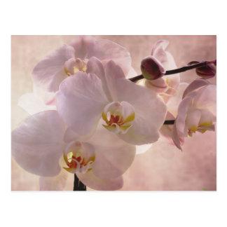 Orquídea Postacrd Postal