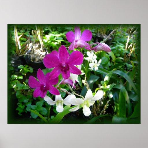 Orquídea Póster