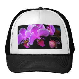 Orquídea preciosa gorros bordados
