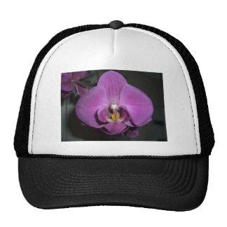Orquídea púrpura amarilla principal del leopardo gorra