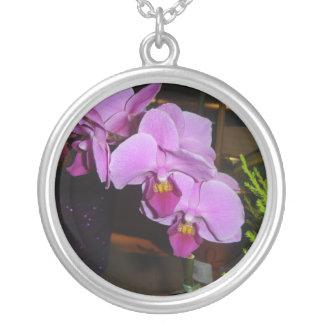 Orquídea púrpura joyerias