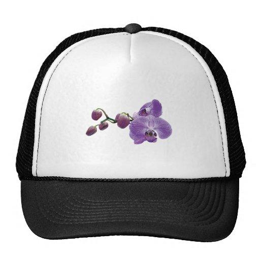 Orquídea púrpura con los brotes gorras