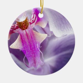 Orquídea púrpura adorno