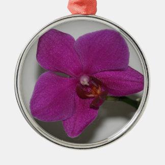 Orquídea púrpura adorno para reyes