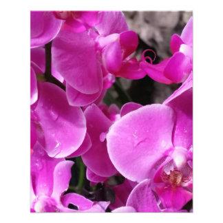 Orquídea púrpura folleto 11,4 x 14,2 cm