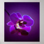 Orquídea púrpura impresiones