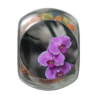 Orquídea púrpura jarras de cristal jelly bely