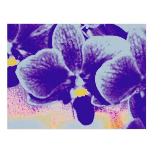 Orquídea púrpura postal