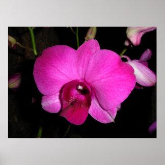 Orquídea púrpura póster