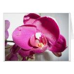 Orquídea púrpura rosada tarjeton