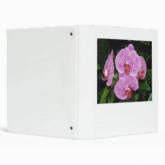 Orquídea púrpura y blanca