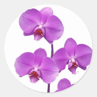 Orquídea rev2 púrpura 600 pegatina redonda