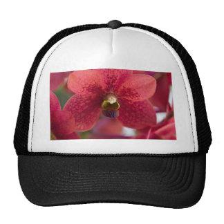 Orquídea roja gorras de camionero