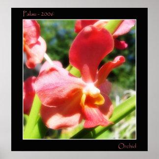 Orquídea roja poster