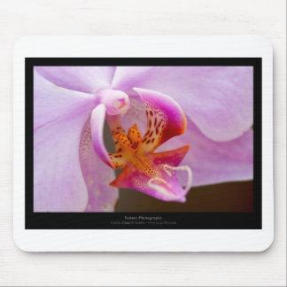 Orquídea rosada de la flor 034 alfombrillas de ratón