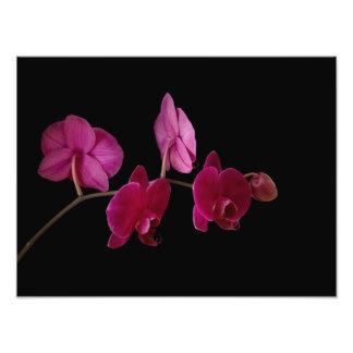 Orquídea rosada del Dendrobium - flores modificada Fotografias