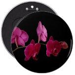 Orquídea rosada del Dendrobium - flores modificada Pins
