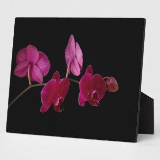 Orquídea rosada del Dendrobium - flores modificada Placa De Plastico