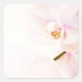 Orquídea rosada del Dendrobium - flores Colcomanias Cuadradas Personalizadas