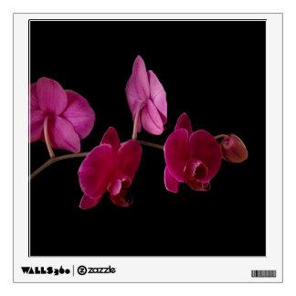 Orquídea rosada del Dendrobium - flores Vinilo Adhesivo