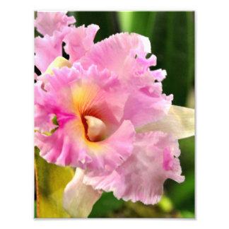 Orquídea rosada delicada fotografía
