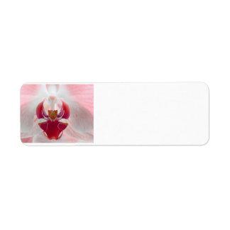 Orquídea rosada etiquetas de remite