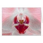 Orquídea rosada felicitación