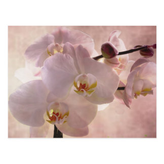 Orquídea rosada hermosa tarjeta postal