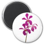 Orquídea rosada imán de frigorífico