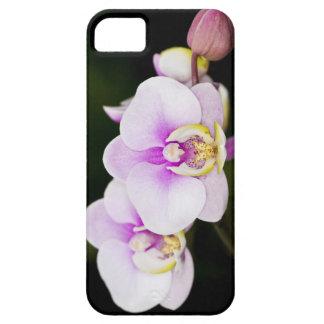 Orquídea rosada iPhone 5 carcasas