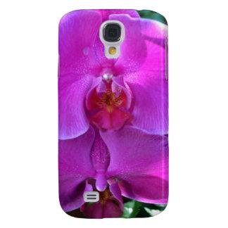 Orquídea rosada oscura del Phalaenopsis