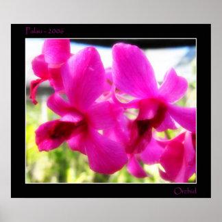 Orquídea rosada poster
