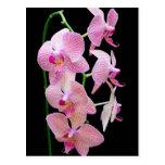 Orquídea rosada postales