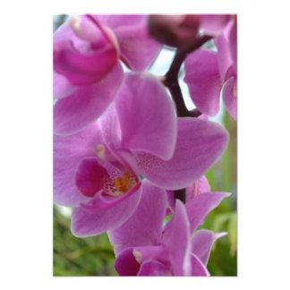 Orquídea rosada R S V P Invitacion Personalizada