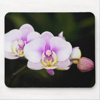 Orquídea rosada tapetes de raton