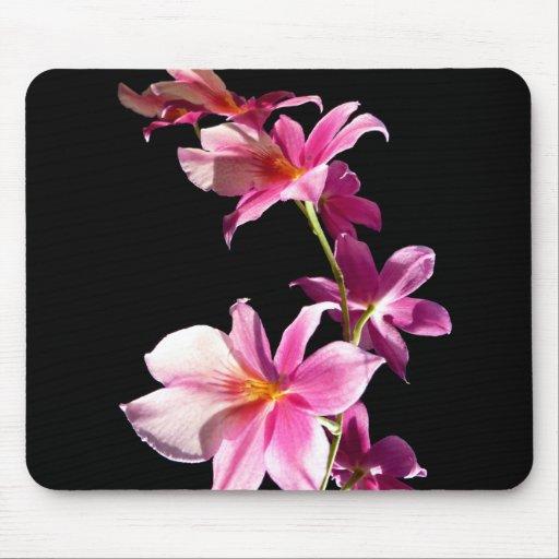 Orquídea rosada tapetes de ratones