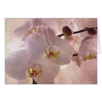 Orquídea rosada tarjeta de felicitación