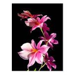 Orquídea rosada tarjeta postal