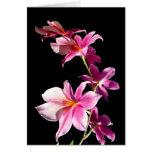 Orquídea rosada tarjetas