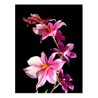 Orquídea rosada tarjetas postales