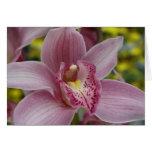 Orquídea rosada tarjetón