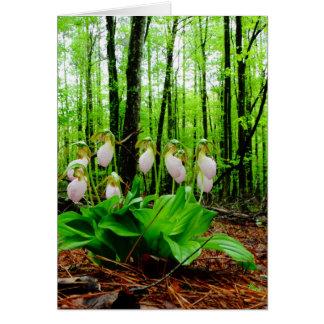 Orquídea salvaje de señora deslizador rosada tarjeta de felicitación