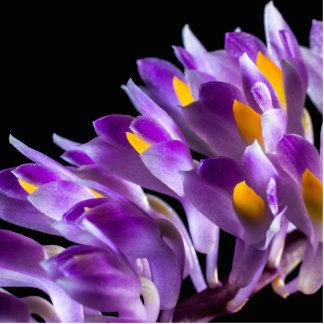 orquídea salvaje llavero fotográfico