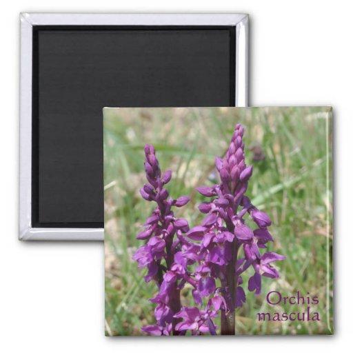 Orquídea salvaje púrpura imán de frigorífico