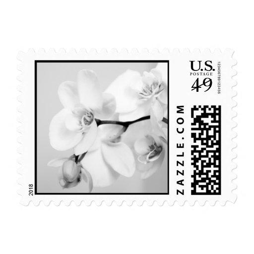 Orquídea Sello